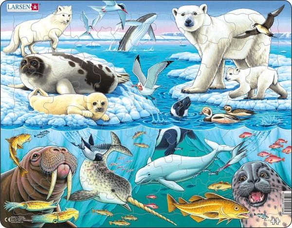 Puzzle Arktis von Larsen