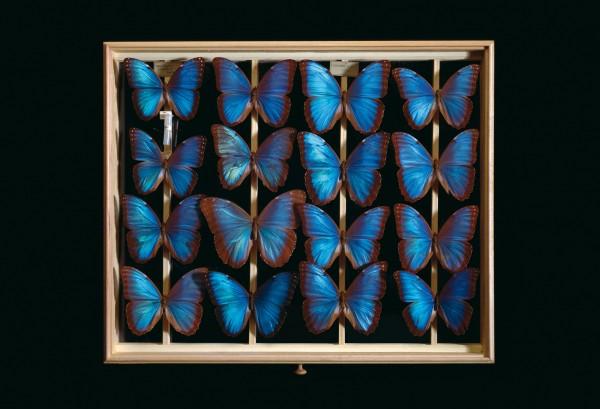 Postkarte Schmetterlingskasten