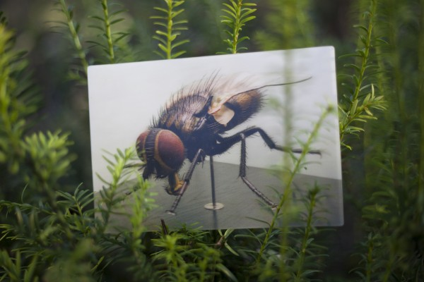 3D Postkarte Stubenfliege
