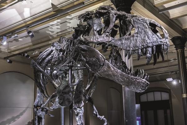 3D Foto-Platzmatte Dinosaurier Tristan Otto