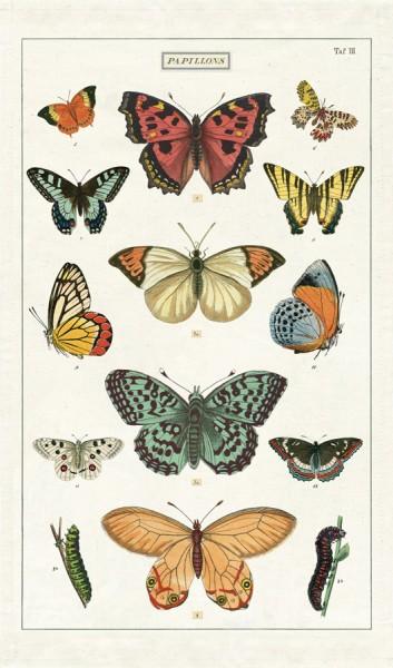 Geschirrtuch Schmetterlinge von Cavallini