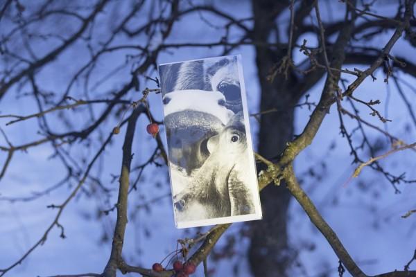Baukampagne Klappkarte Eisbär