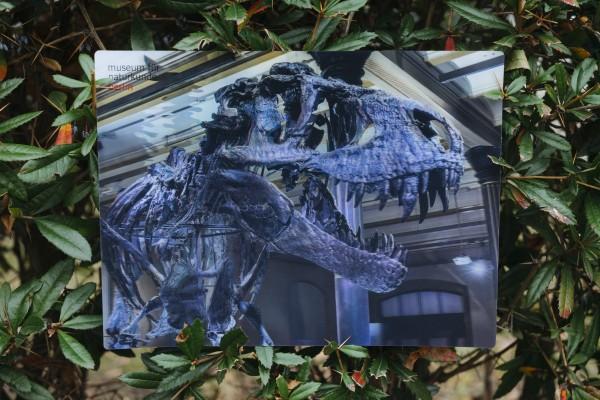 3D Foto-Platzmatte Tristan Otto Saal