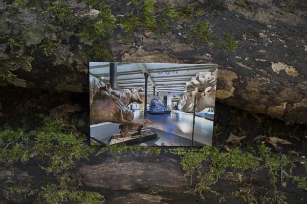 Postkarte Museum für Naturkunde Blick in die Ausstellung