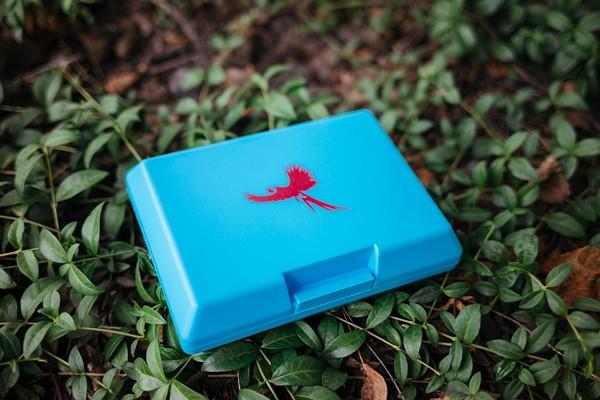 Brotose Ara fliegend blau