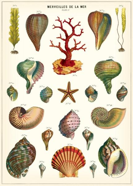 Cavallini Vintage Poster/ Papier Merveilles de la mer