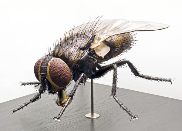 3D Postkarte Stubenfliege Museum für Naturkunde