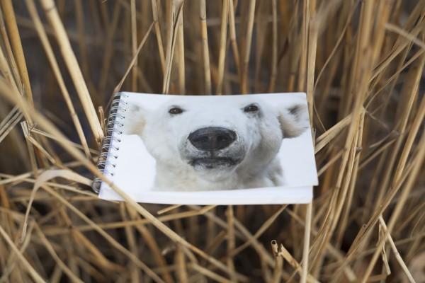 Notizblock Postkartencover Eisbär Knut