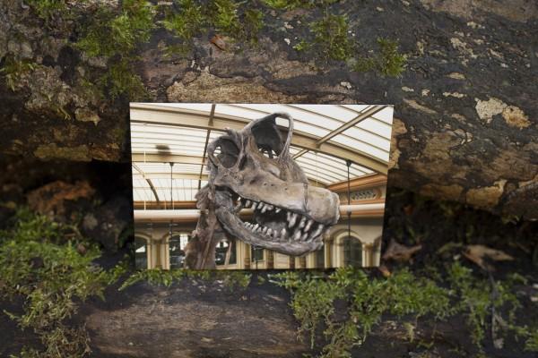 Postkarte Brachiosauruskopf