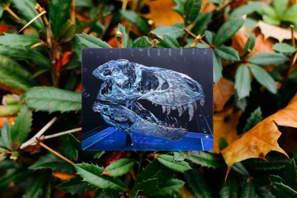 3D Magnet Dinosaurier Schädel Tristan Otto