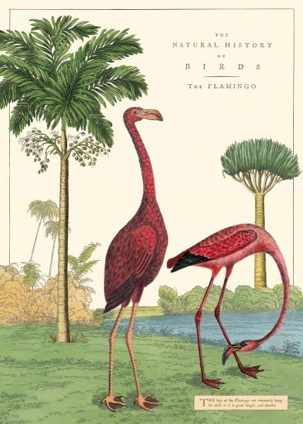 Cavallini Vintage Poster/ Papier Natural History