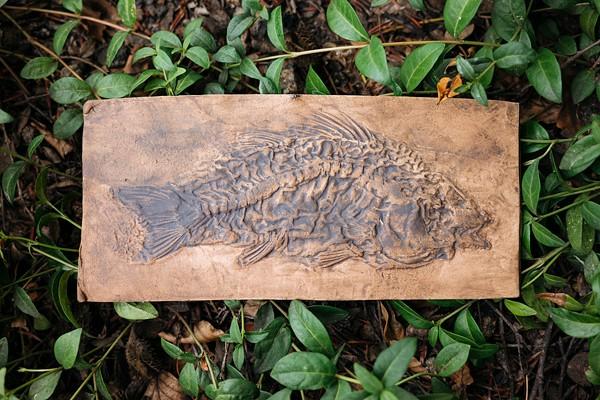Fossiler Abdruck Amphiperca multiformis Barsch