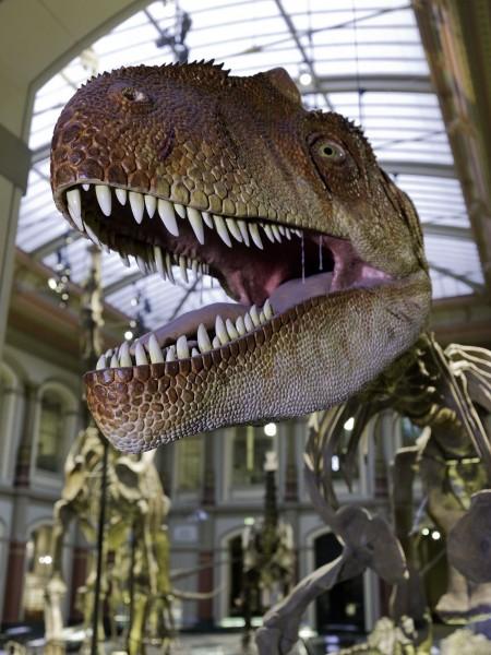 3D Postkarte Allosauruskopf Museum für Naturkunde