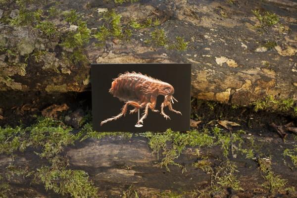 Postkarte Floh Kellermodell Museum für Naturkunde