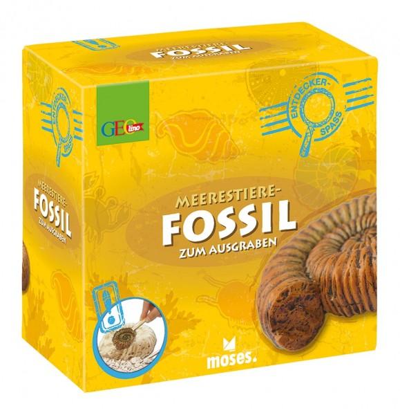 Geolino_meerestier_fossil_moses
