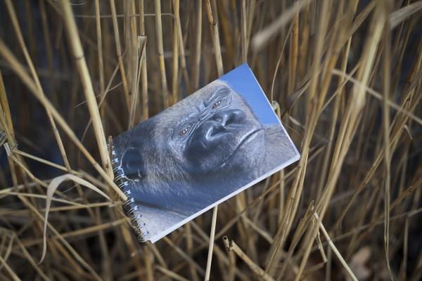 Notizblock Postkartencover Gorilla Bobby