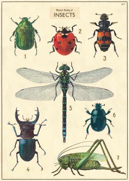 Cavallini Vintage Poster/ Papier Insekten