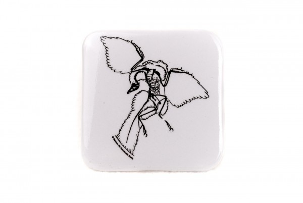 Button Archaeopteryx