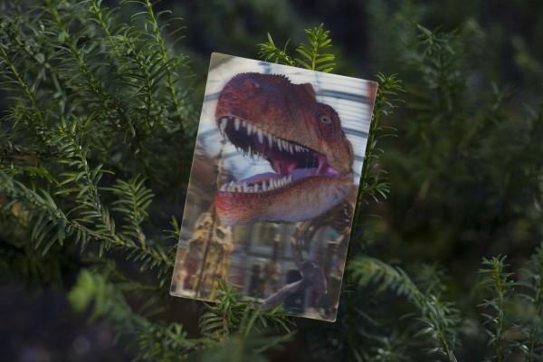 3D Postkarte Allosauruskopf