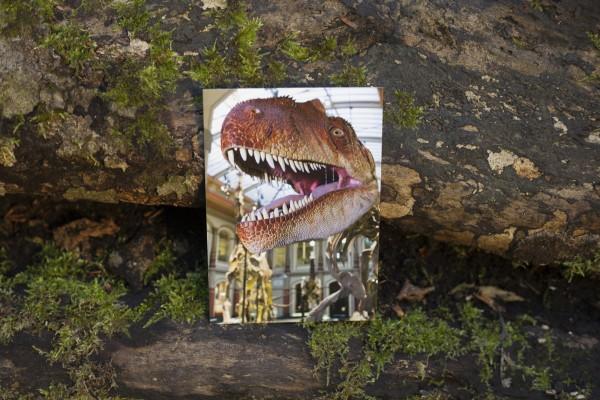 Notizblock Postkartencover Allosaurus