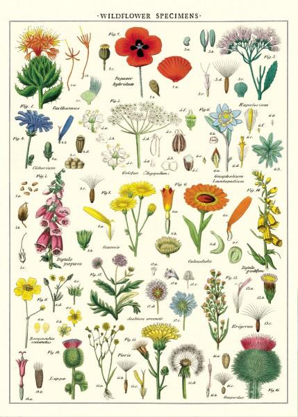 Cavallini Vintage Poster/ Papier Wildblumen