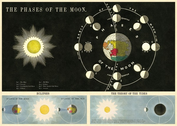 Cavallini Vintage Poster/ Papier Phases of the moon
