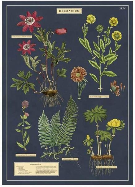 Cavallini Vintage Poster/ Papier Herbarium