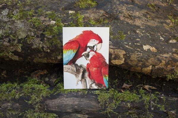 Postkarte Grünflügelaras